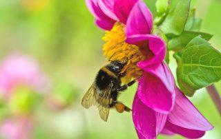 best nasal spray for hay fever